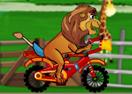 Lion Ride