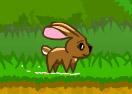 Fluffy Runner