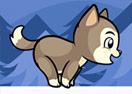 Mr. Jump Husky